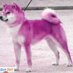 ハーデス 紫7から犬